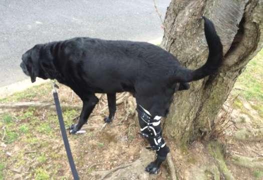 Dog Knee Brace Reviews