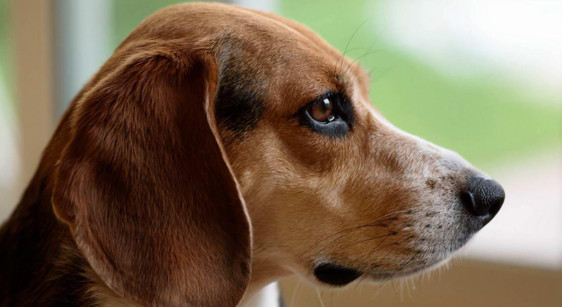 View Ad: Craigslist Puppies for sale South Carolina USA