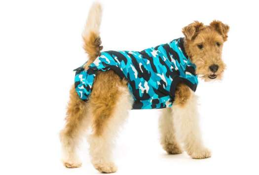 Onesie For Dog After Surgery