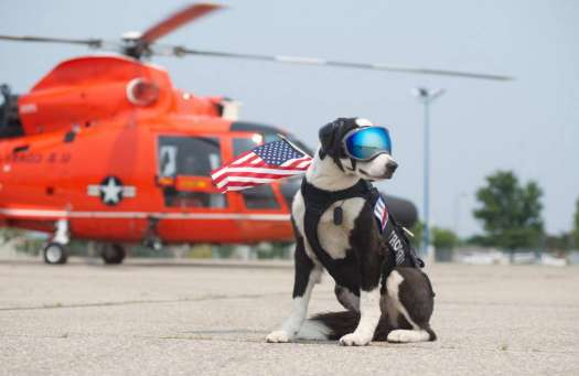 Rescue Dogs Ct