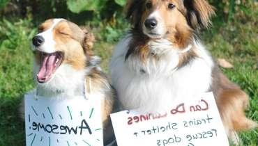 Service Dog Certificate Pdf