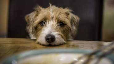What To Feed Dog With Diarrhea