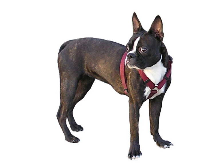 Body Collar For Dogs