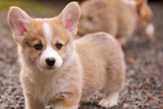 Cute Dogs That Stay Small