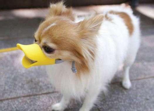 Dog Muzzle For Barking