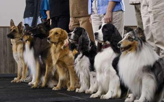 Dog Training Apprenticeship