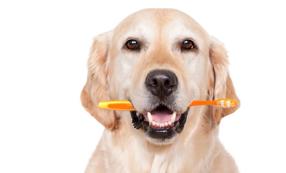How To Keep Healthy Mouth Dog Petswithlove Us