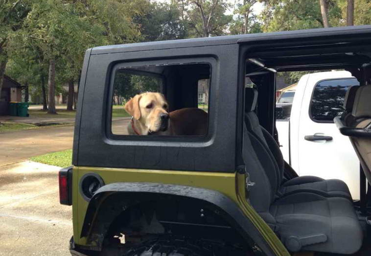 Jeep Dog Bed