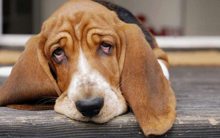 What Causes Diarrhea In Dogs