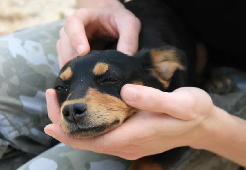 Mobile Dog Grooming Mckinney Tx