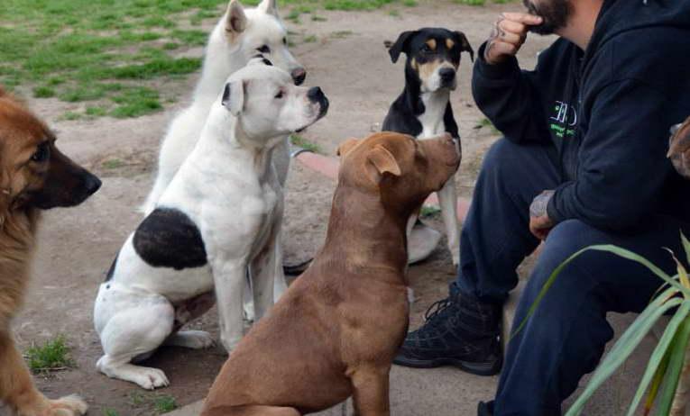 Dog Psychology Center