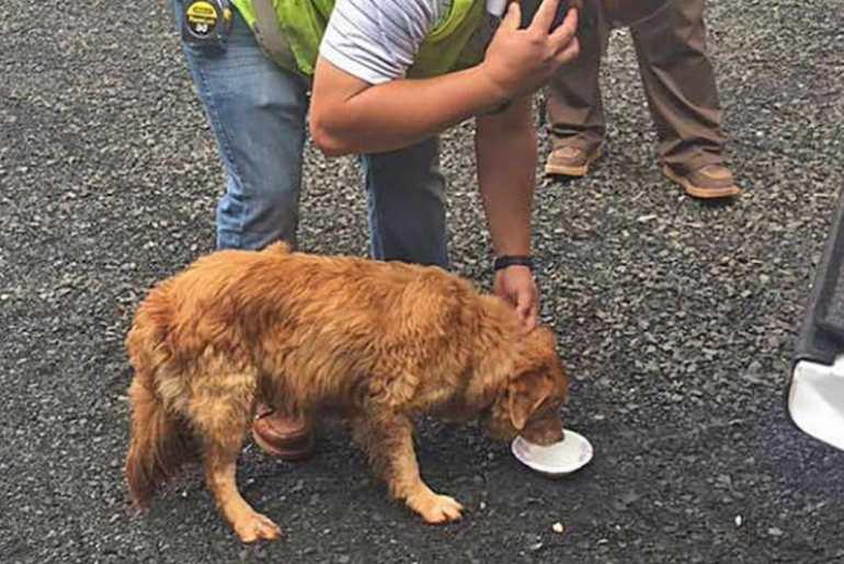 Dog Rescue Mn