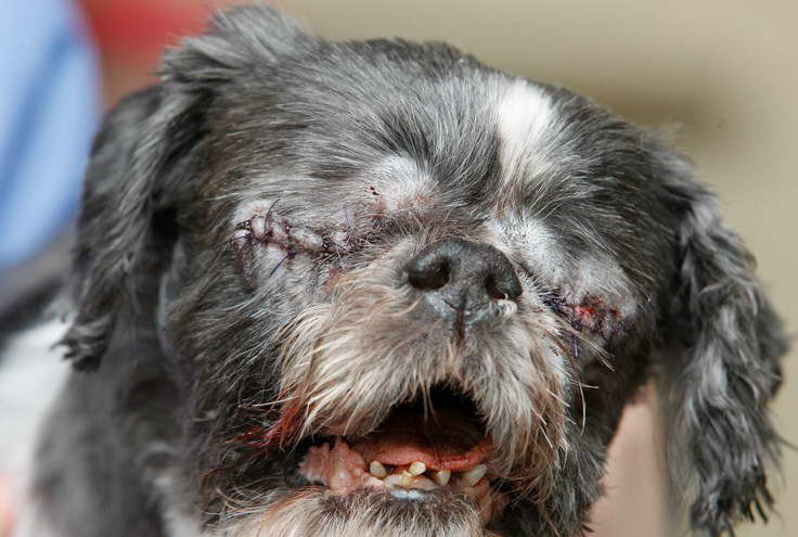Eye Infection In Dogs