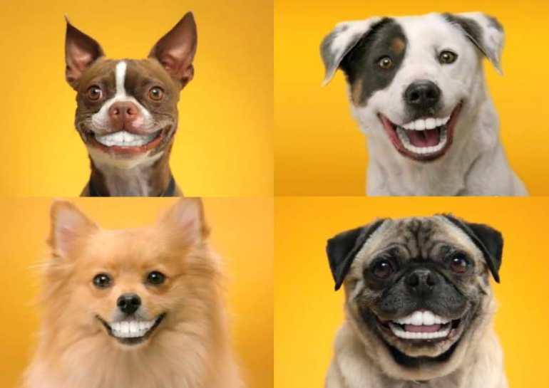 Pedigree Dog Food Coupons