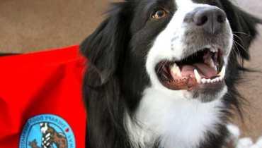 Therapy Dog International
