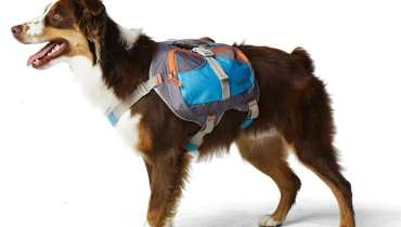 Backpacks For Dogs