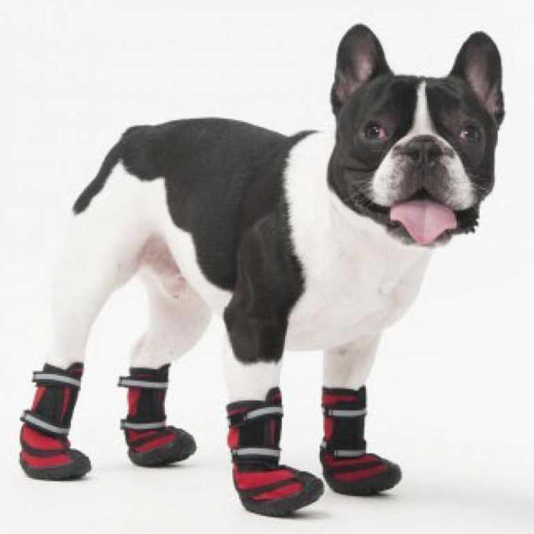 Booties For Dogs