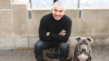 Cesar Dog Trainer