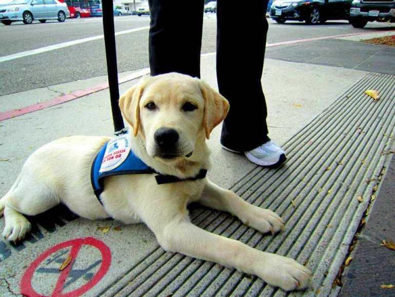 Depression Service Dog
