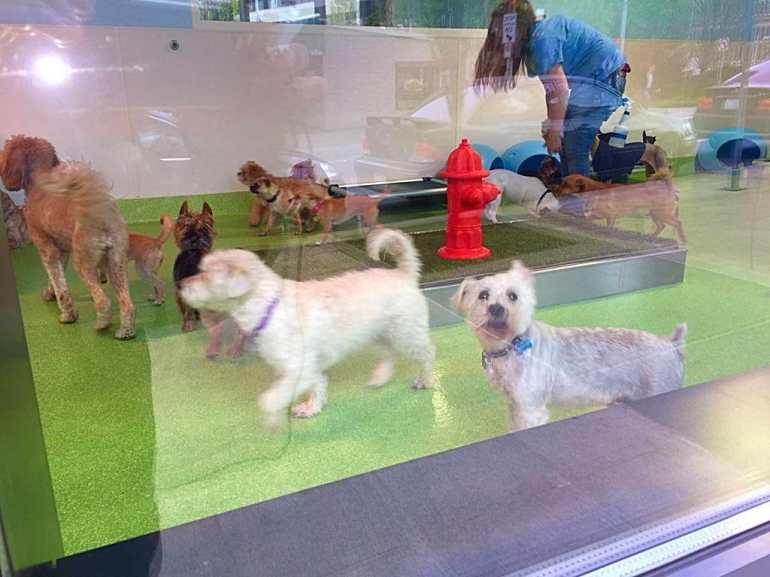 Dog City Seattle