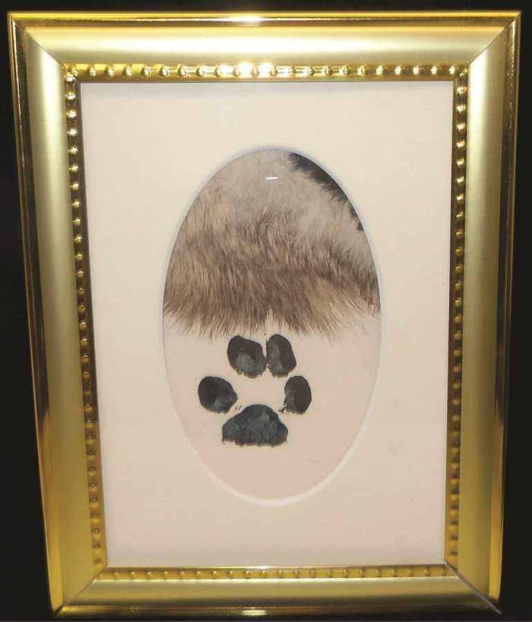 Dog Cremation Cost