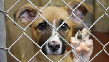 Dog Shelters In Ohio