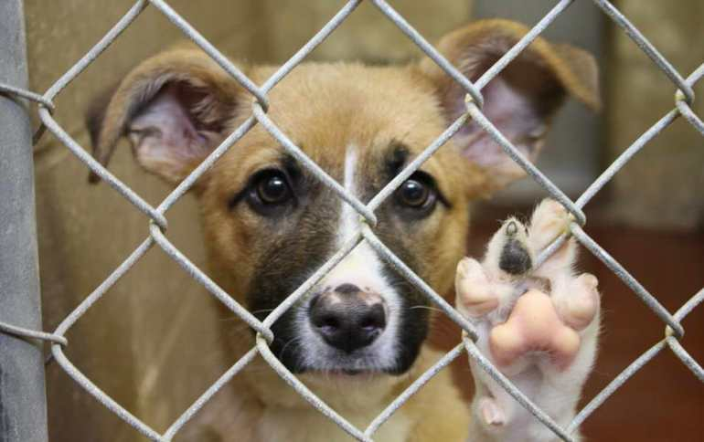 Dog Shelters In Ohio