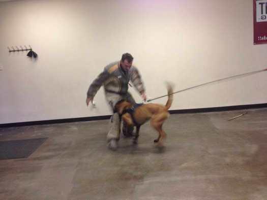 Dog Trainer Near Me