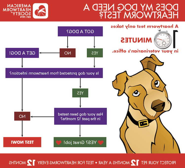 Heartworm Symptoms Dogs