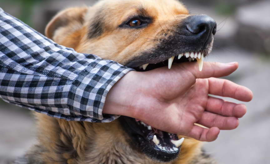 Dog Bite Lawyers Near Me
