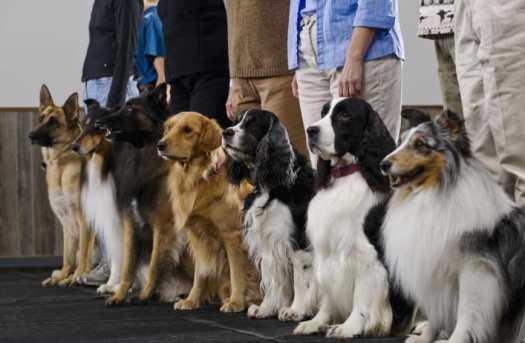 Dog Training Certification Colorado