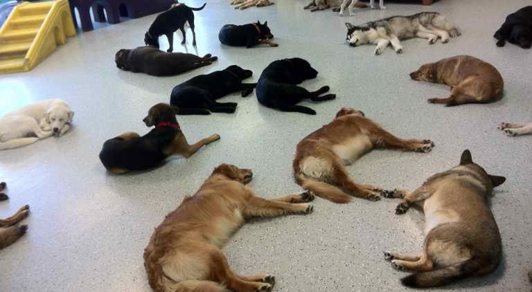 Dog Day Care Minneapolis