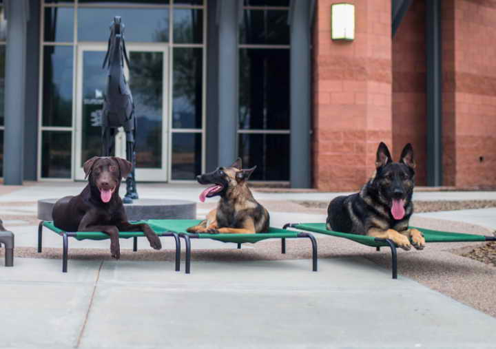 Dog Day Care Scottsdale