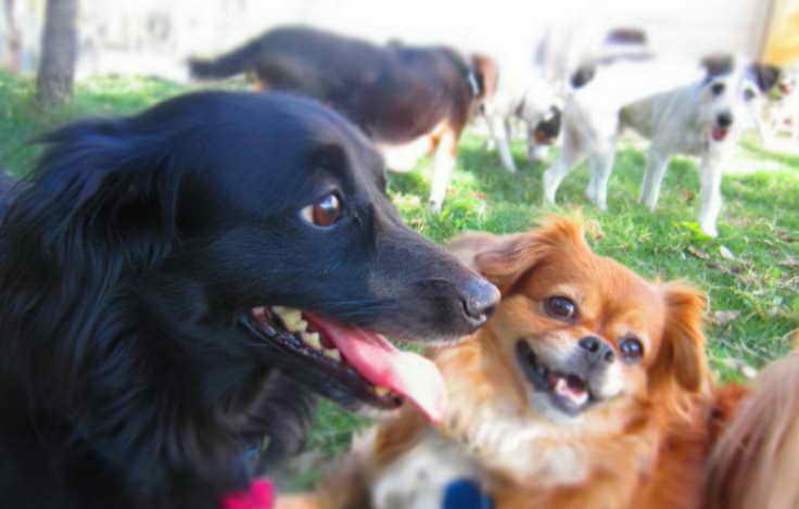 Dog Daycare Plano