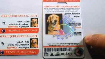 Support Dog Registry