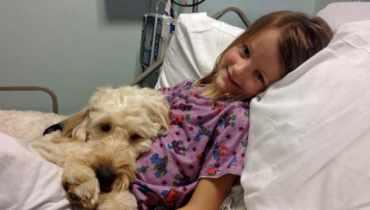 Allergy Service Dog