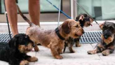 Astoria Dog Walker