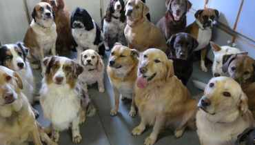 Dog Daycare Ashburn Va