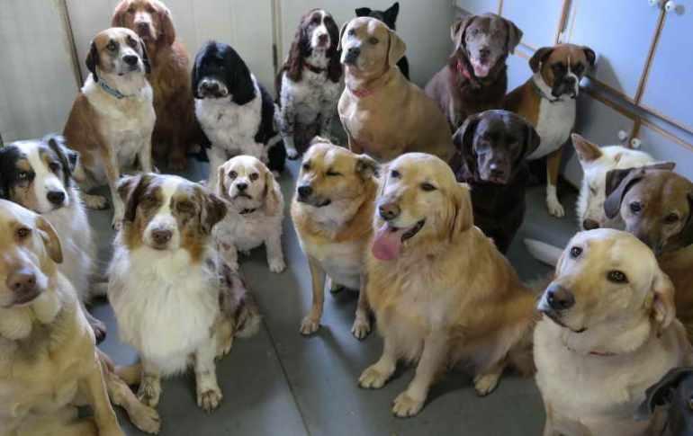 Dog Daycare Ashburn Va