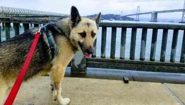 Dog Daycare Berkeley