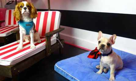 Dog Daycare West Hollywood