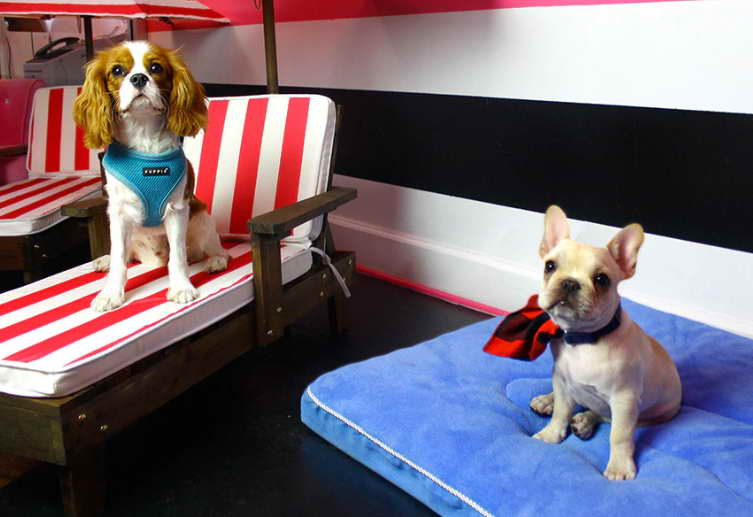 Dog Daycare West Hollywood