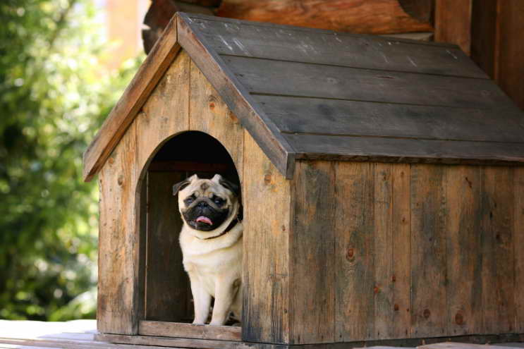 Dog Liability Insurance For Renters