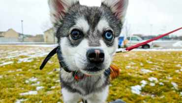Dog Obedience Training Utah