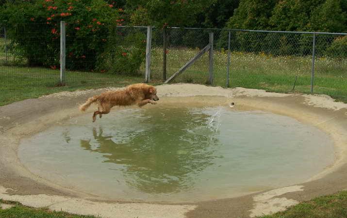 Dog Pond Kennels