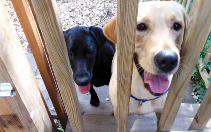 Hire The Best Dog Sitter in New Orleans