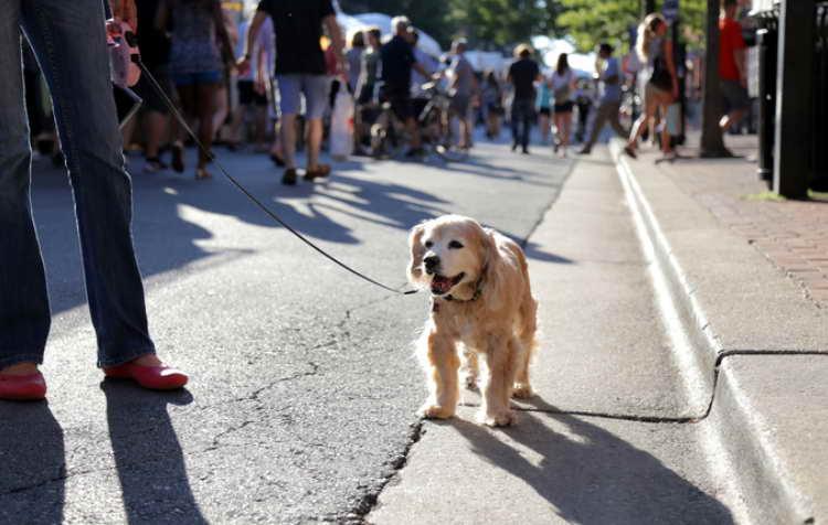 Dog Walking Alexandria