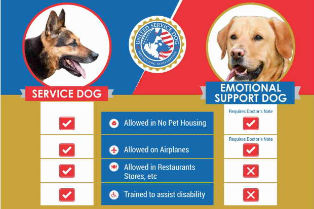 Emotional Support Dog Vs Therapy Dog