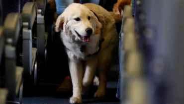 Emotional Support Dog Washington State
