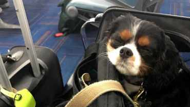 Flying With Emotional Support Dog Questions